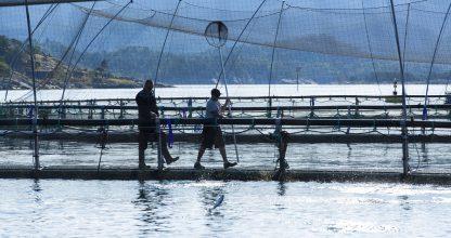 SANDNES/STAVANGER 2013-07-25: Veterniær Karl Fjell fra Fishguard besøker oppdrettsanlegg.  FOTO: WERNER JUVIK